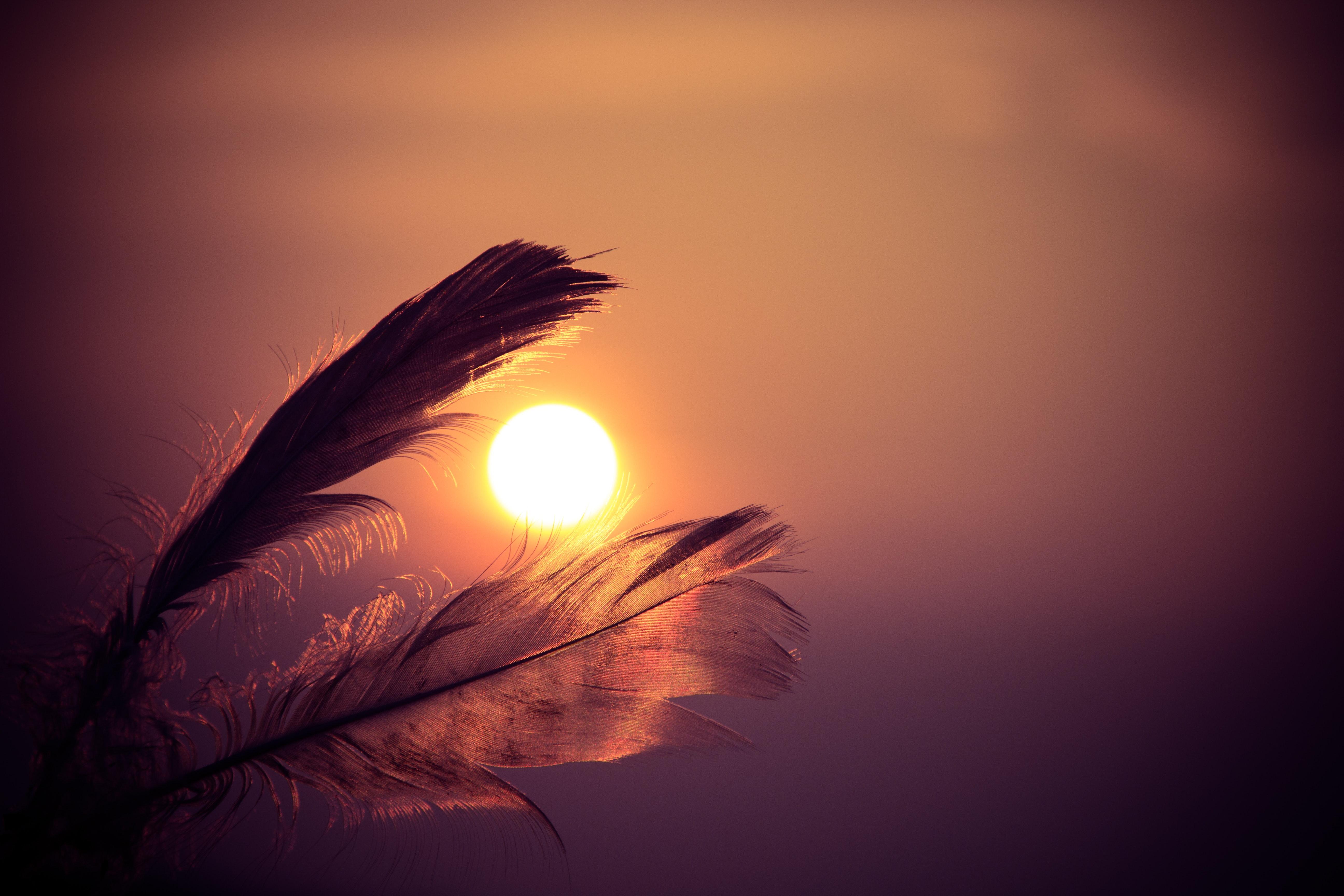feathers-sky-sun-8662
